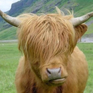 emo yak is emo